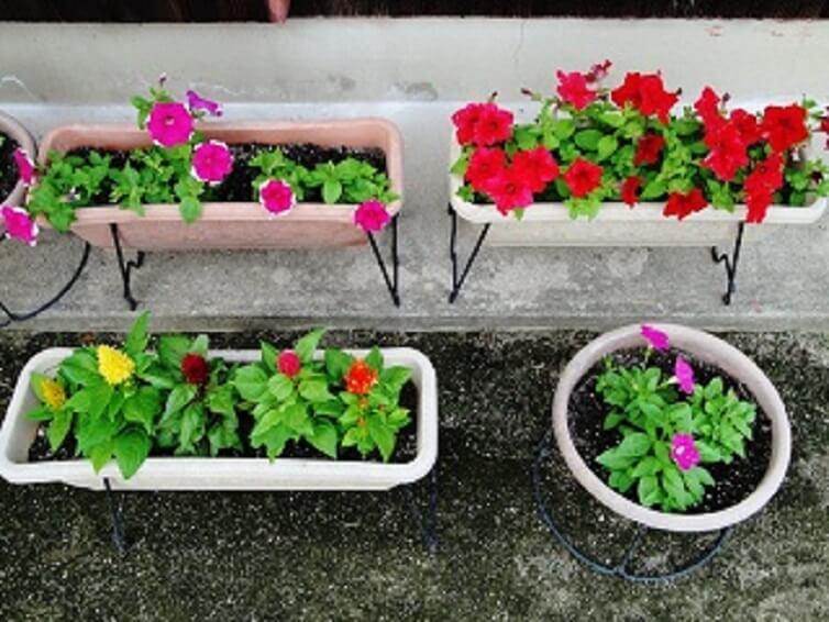 Zero整体院 院前の花